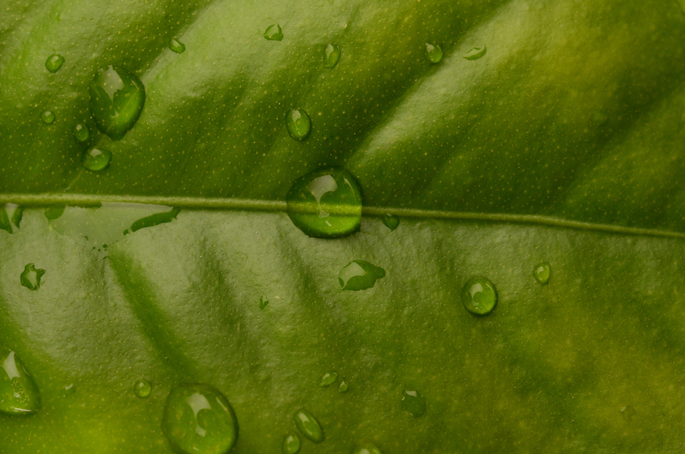 Citrus Leaves Lampe Berge Fragrance
