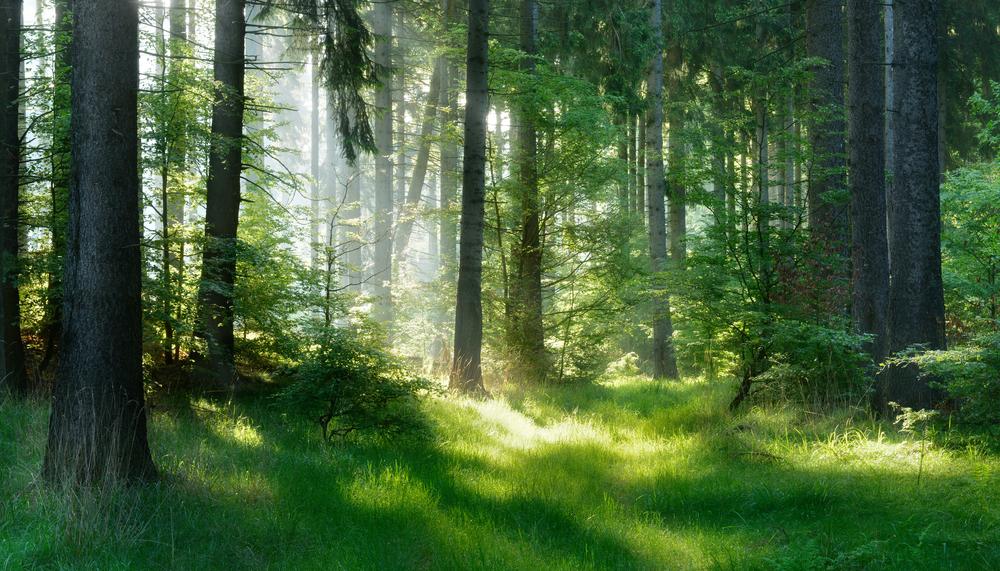 Forest Mist Lampe Berge Fragrance