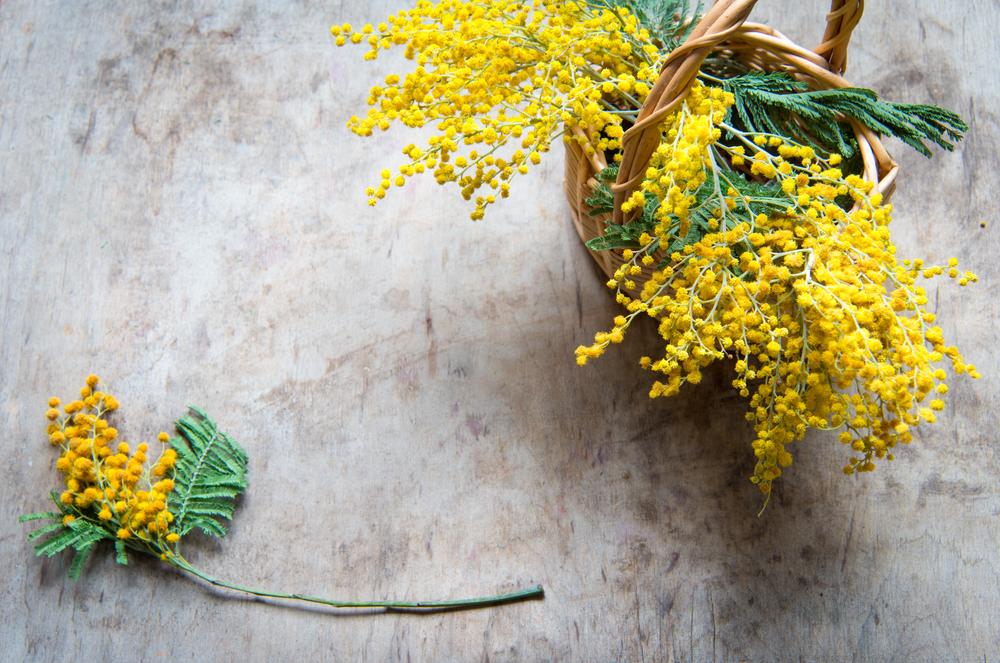 Luminous Mimosa Lampe Berge Fragrance